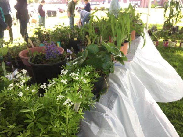 Plant Sale June 5th