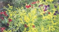 Yellow brings happiness to the garden